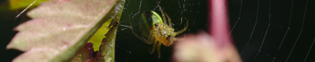 Photography: Part I – Spiders and webs