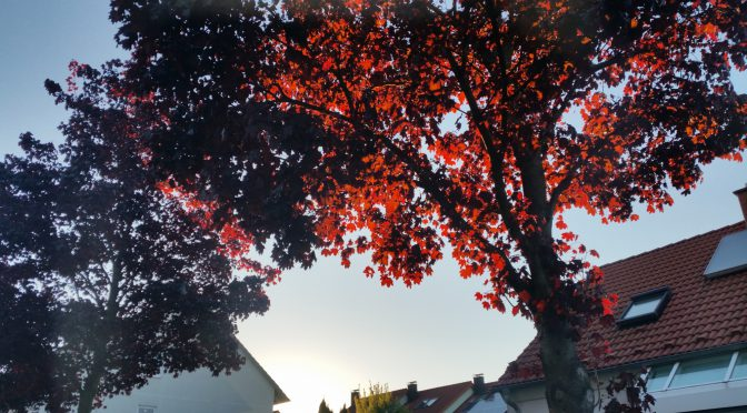 Snap 066 – Roter Baum